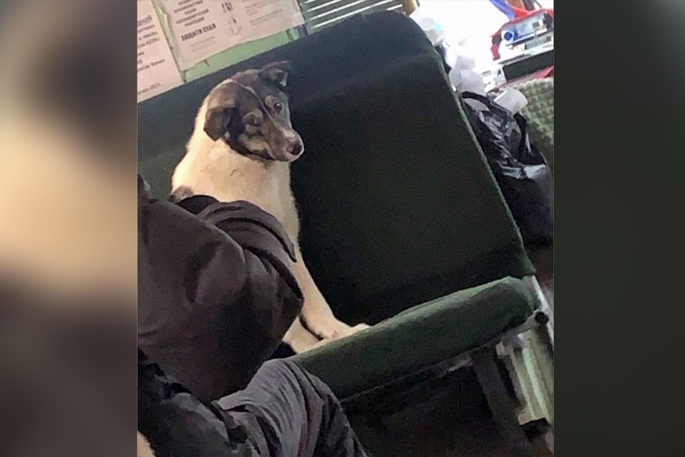 """Водитель дал собакам погреться в салоне автобуса. Фото: """"Новости Якутии"""" (t.me/ykt_novosty)"""