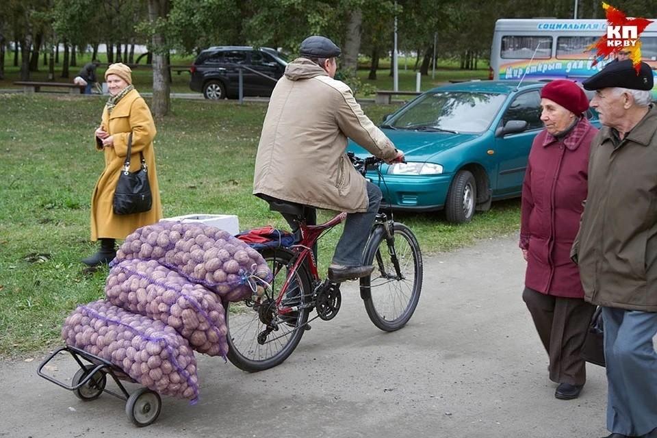 """В россии предложили продавать картофель """"эконом класса"""""""