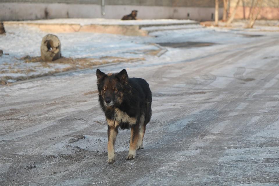 Дело о гибели четырех человек от собак в Красноярске дошло до суда