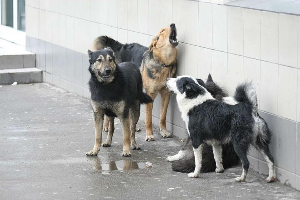 910 беспризорных псов отловят в этом году в Иркутске