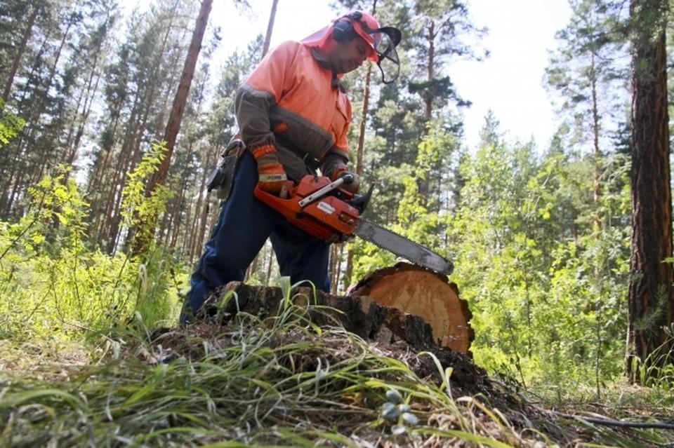 В Омской области судят лесоруба, из-за которого напарника убило дерево
