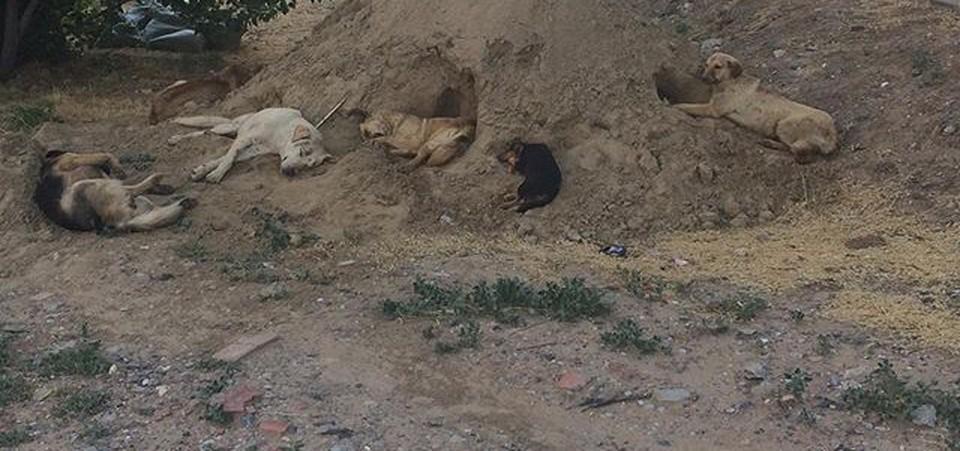 В Астрахани бизнесмен не стерилизовал собак и теперь предстанет перед судом