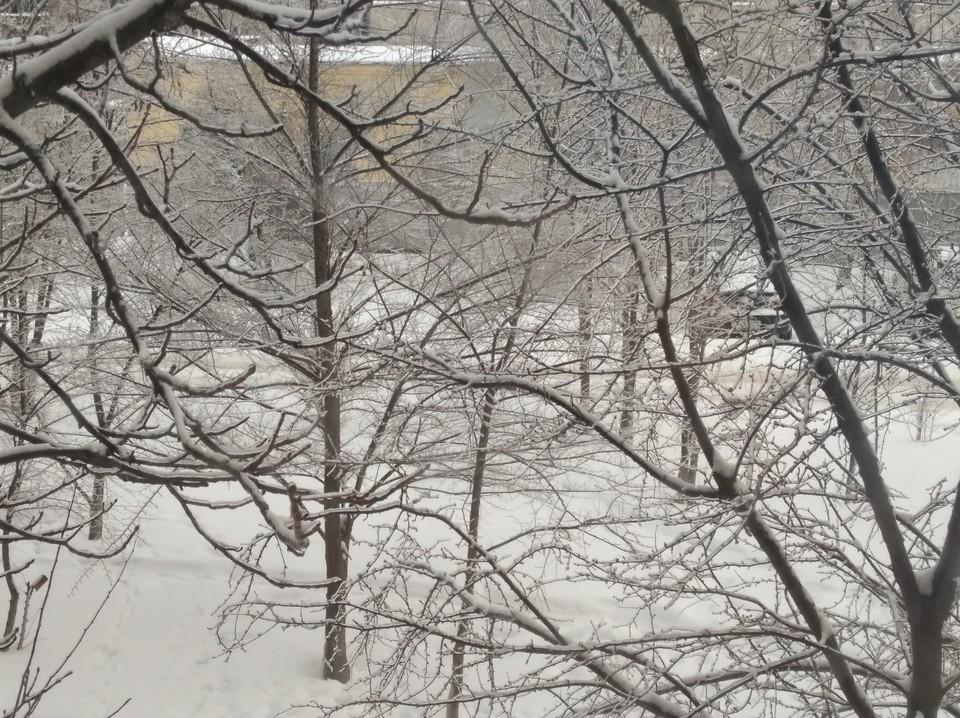 Этой зимой в регионе достаточно снега