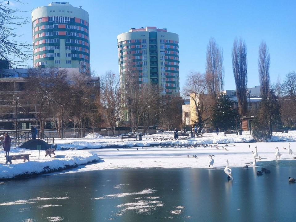Утки и лебеди спокойно прогуливаются по замерзшему озеро. Фото: Иван Курабцев