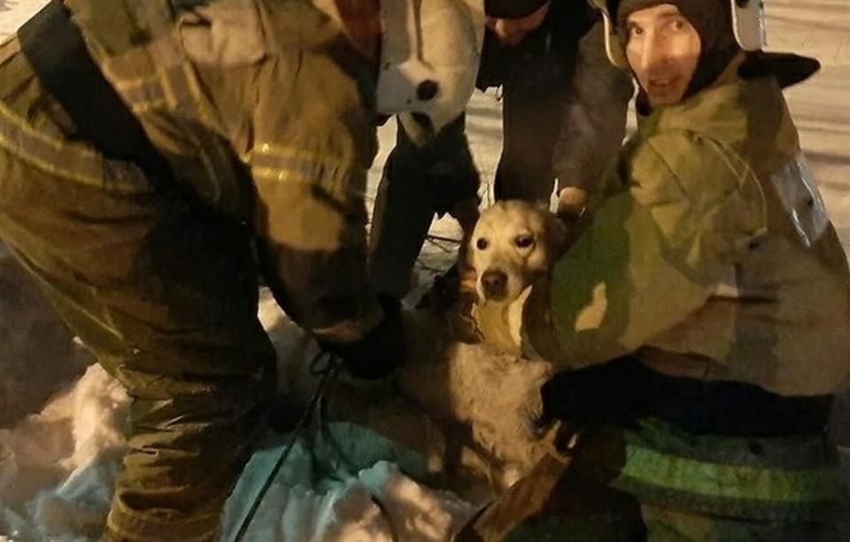 В Омске спасли собаку, провалившуюся в колодец с водой. Фото: ГУ МЧС России по Омской области