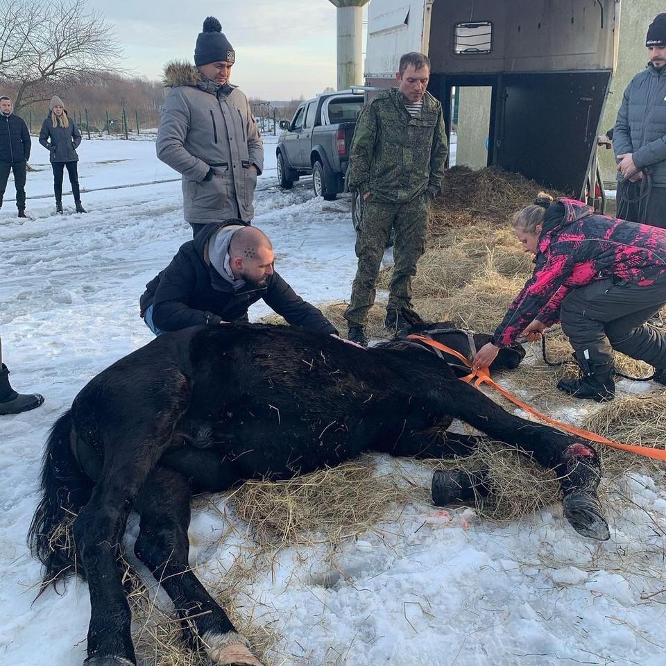 Коня пытаются спасти.