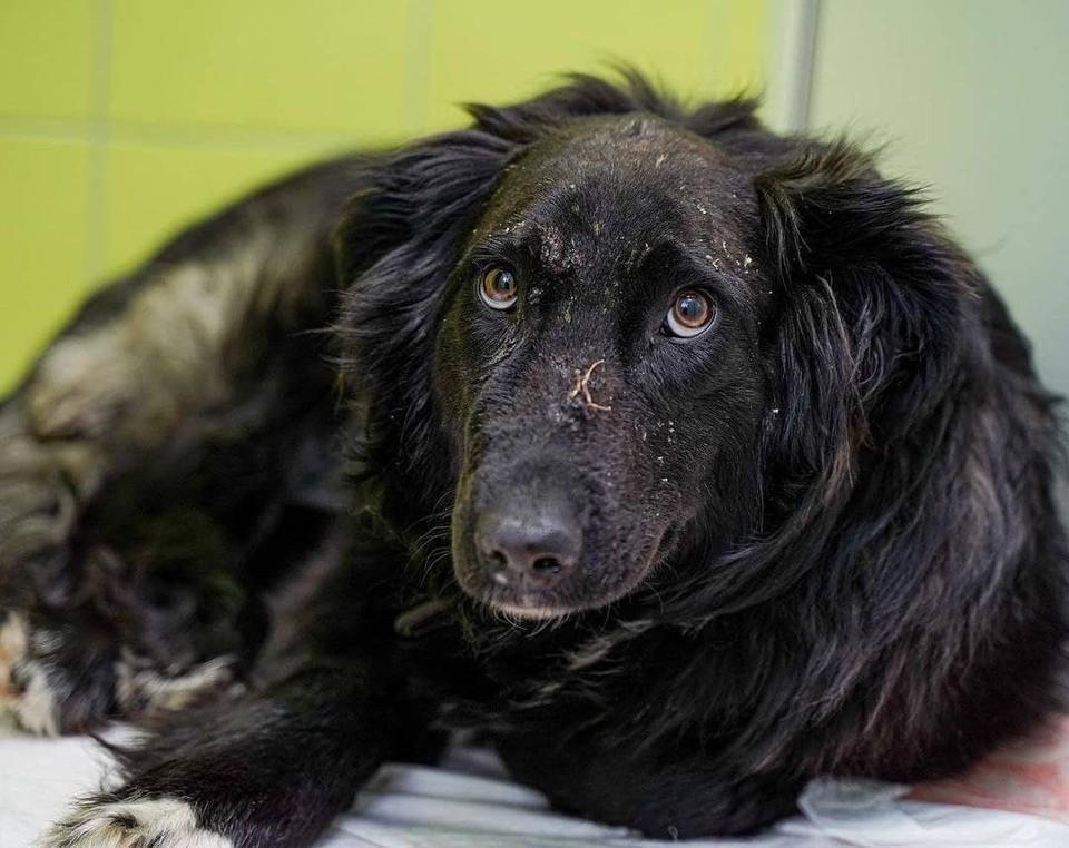 У собаки в теле обнаружили три десятка фрагментов дроби. Фото: bagrat.vet/Instagram.com