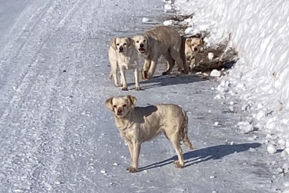 Животные провели на сильном морозе несколько дней. Фото: cotpes42.