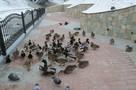 «Уж тает снег…» Погода на выходных 27-28 февраля заставит белорусов вспомнить стихи классика