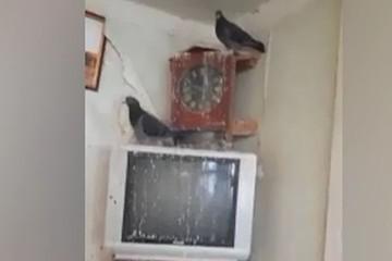 «Они же погибнут на улице!»: житель Первоуральска устроил голубятню в своей квартире