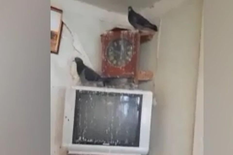 Из-за птиц стены и мебель в квартире покрыты пометом. Фото: кадр с видео