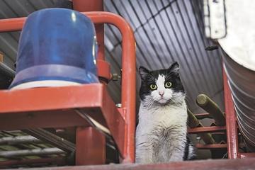 «Америкой должен править Барсик!» Чем сейчас занимаются самые знаменитые коты России