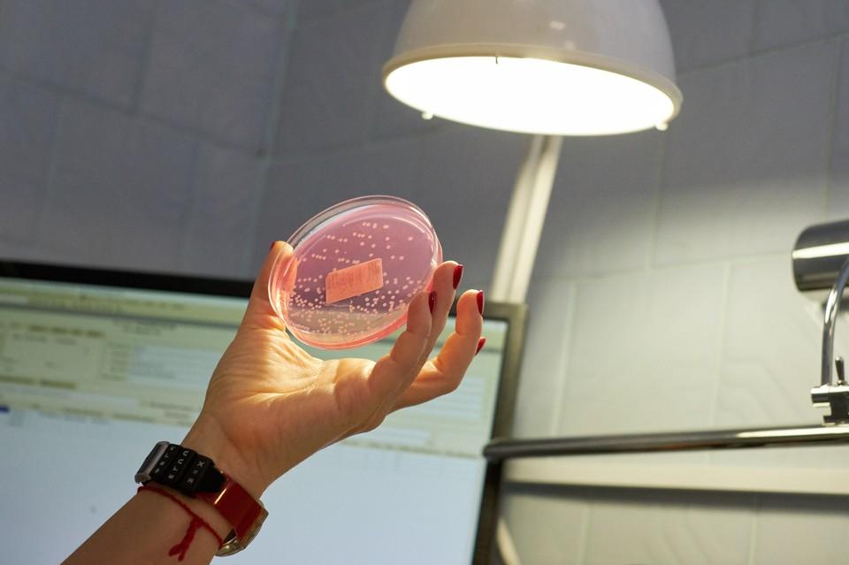 Владимир Дедков сомневается, что главный вирус 2020 года вырастили в лаборатории.
