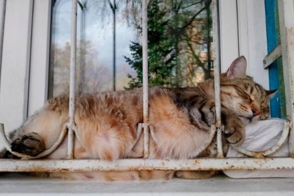 Кот Степан весил 20 кг. Фото: Ирина Балахнина