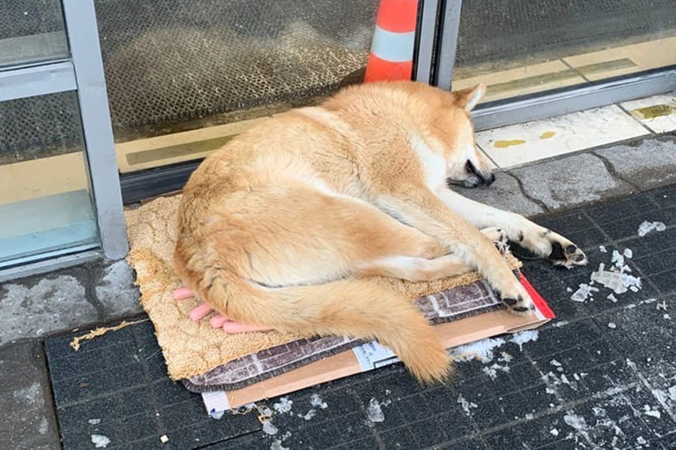 Дирекция центра собак не только не прогоняет, а, наоборот, защищает.