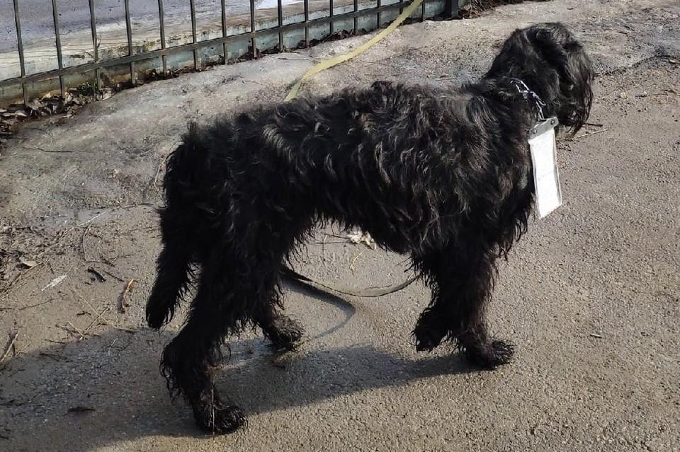 В Мурино пса бросили у церкви, оставив странную записку. Фото: vk.com/9online