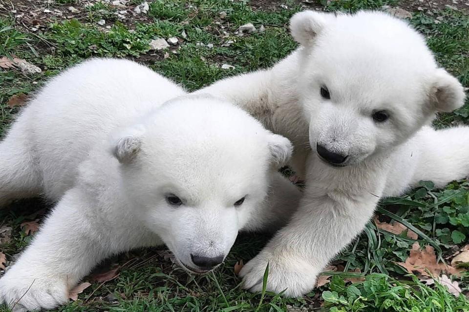 Фото: instagram.com/safari_park_gelendzhik/