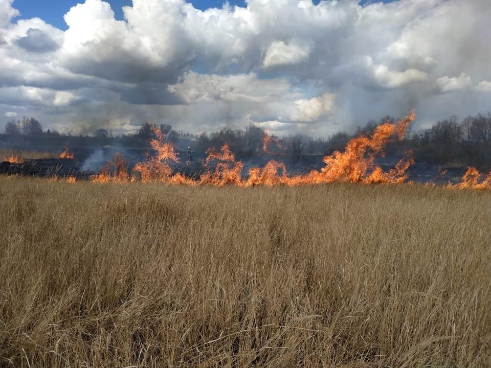 В деревне Волобуево площадь горящего сухостоя составила два гектара