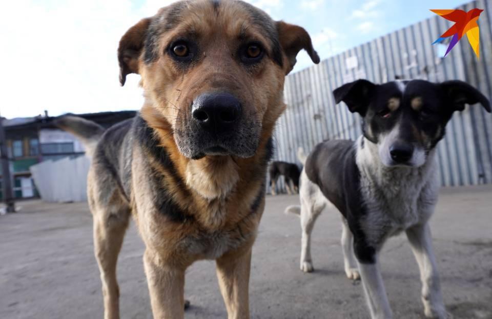 Волонтеры просят защитить животных от жестоких людей.