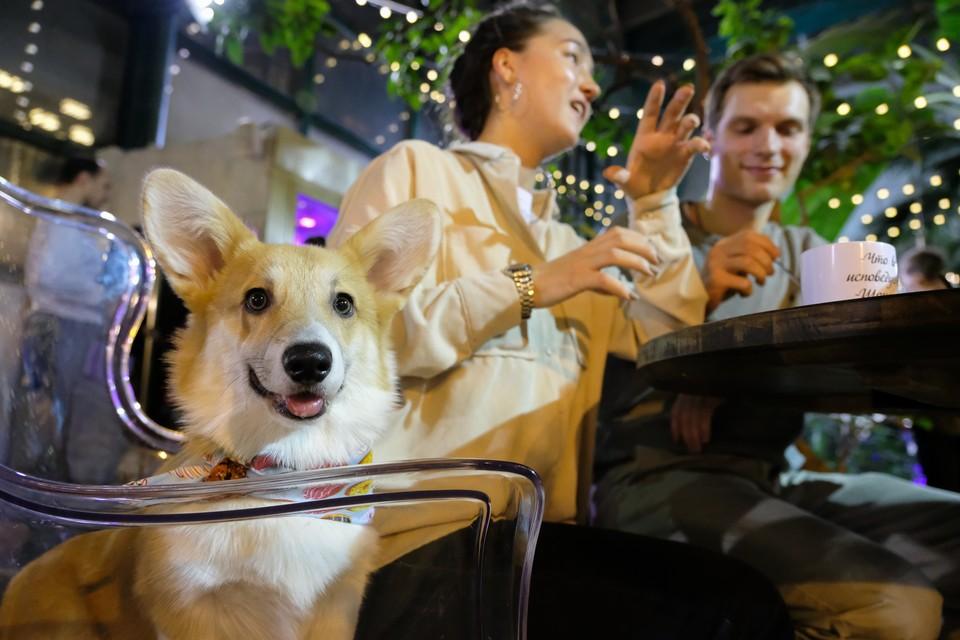 Петербургский ЗакС направил в Госдуму предложение создать единые правила посещения магазинов и ресторанов с собаками
