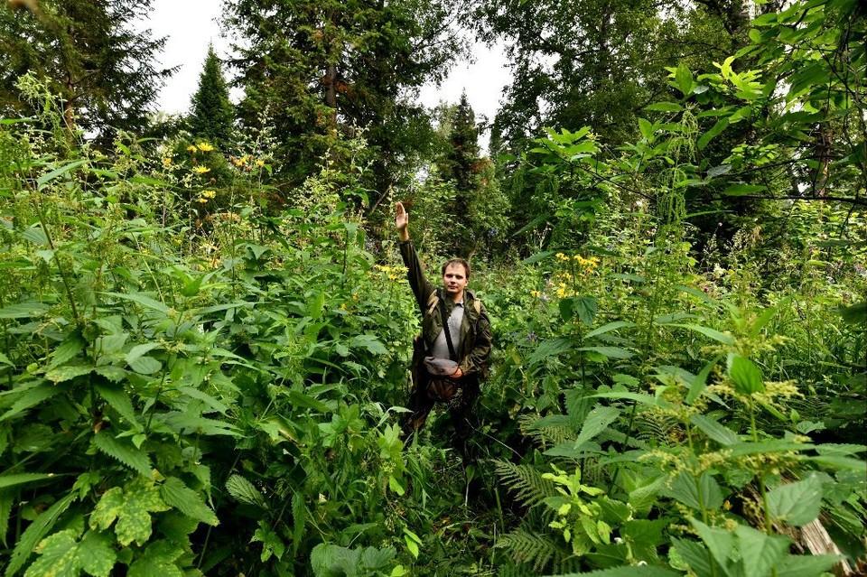 Российские ученые изучают гигантские растения тайги юга Сибири. Фото: сайт ТГУ