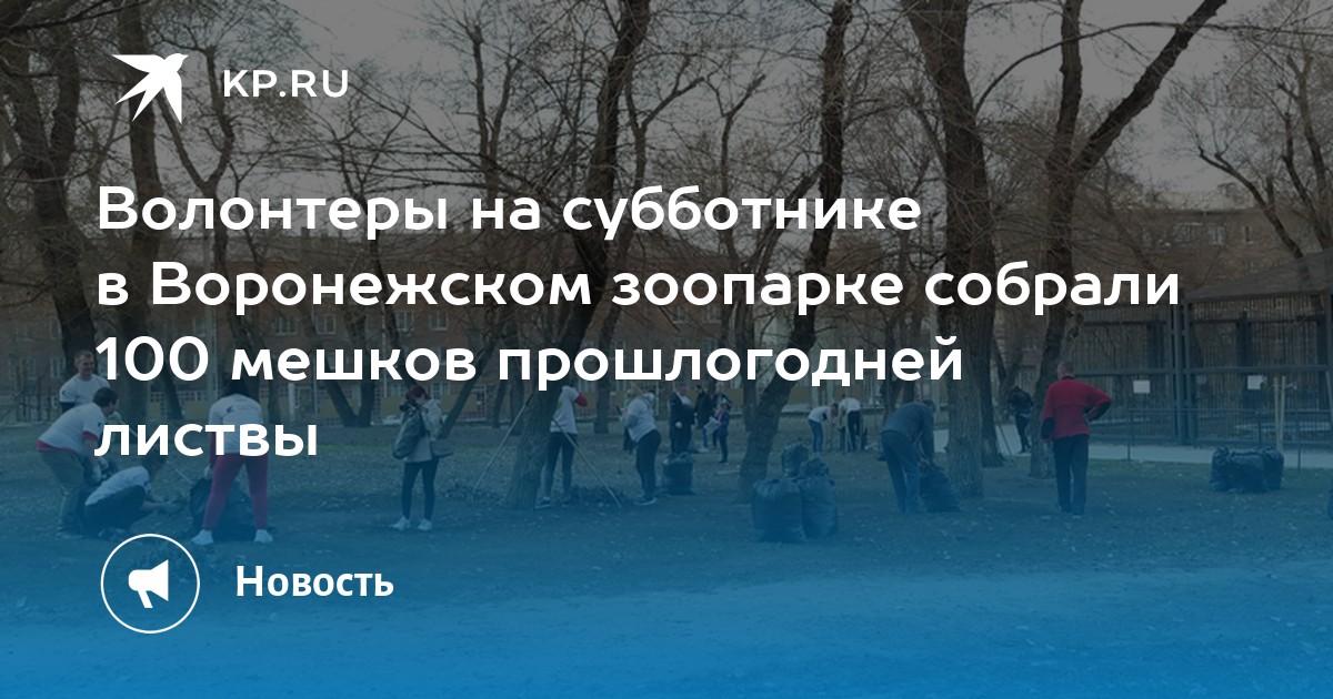 Волонтеры на субботнике в Воронежском зоопарке собрали 100 мешков прошлогодней листвы