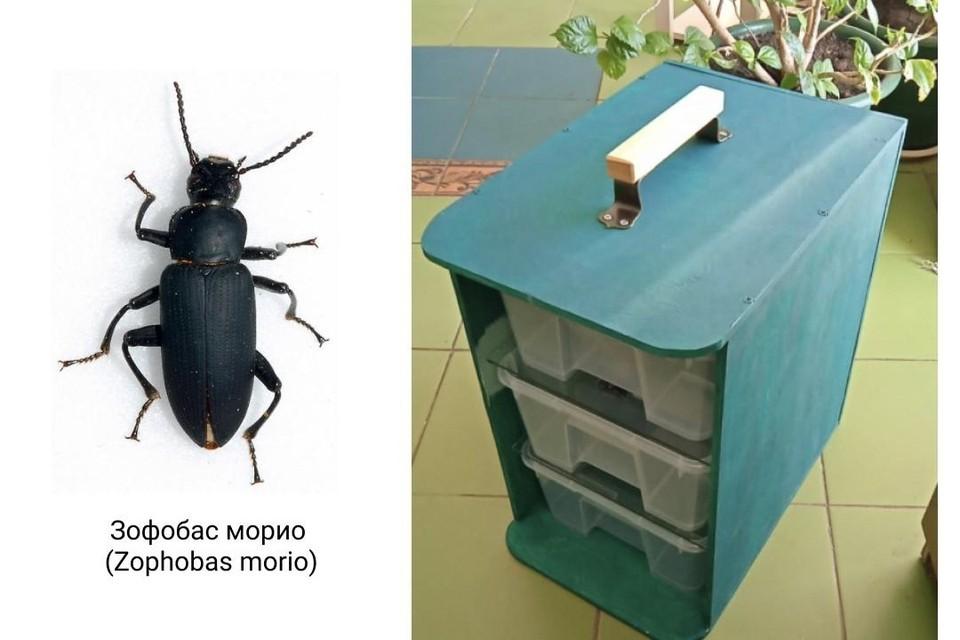 Поедающих пластик жуков обнаружили биотехнологи из Якутии.
