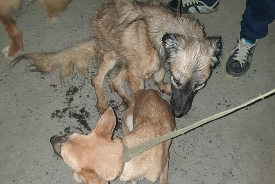"""Бедных собак отправили на передержку. Фото: служба спасения животных """"Зоодозор"""""""