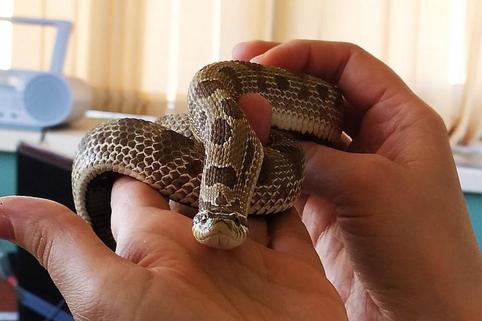 В Приморье проснулись змеи.