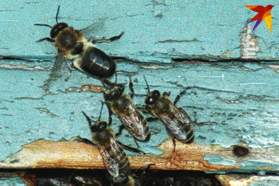 """У депутатов возник вопрос, а кто будет проверять """"правильные ли это пчелы и делают ли они правильный мед""""?"""