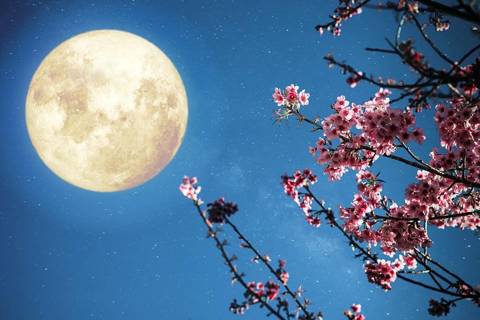 Цвет Суперлуне придают весенние цветы