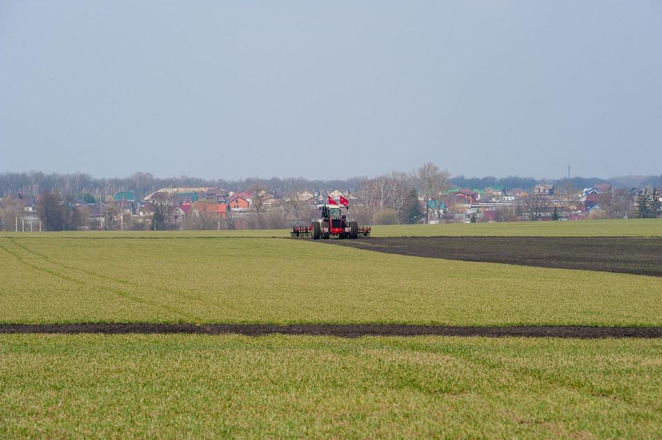 В Орловской области озимые придется пересеивать на 9,7 тысячах гектар