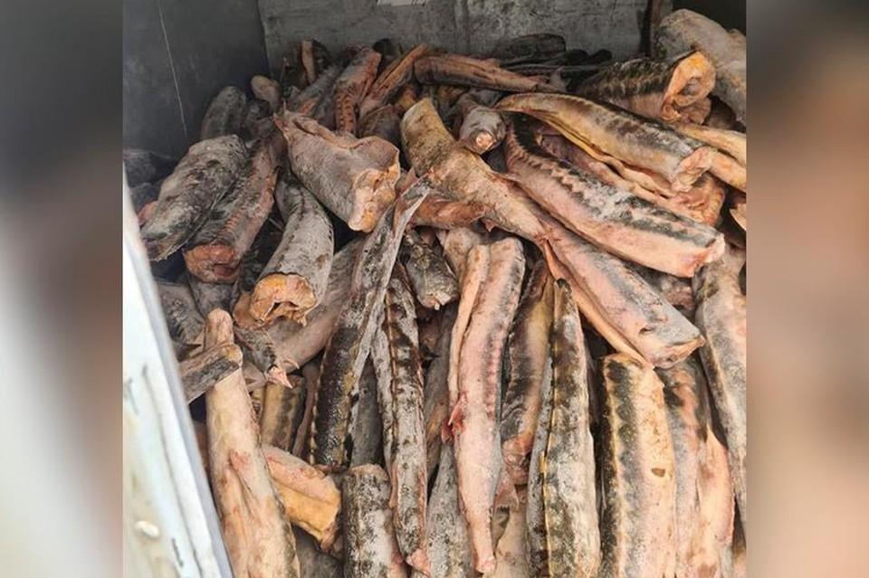 Тайник браконьеров обнаружили в Мангыстау, 26 апреля.