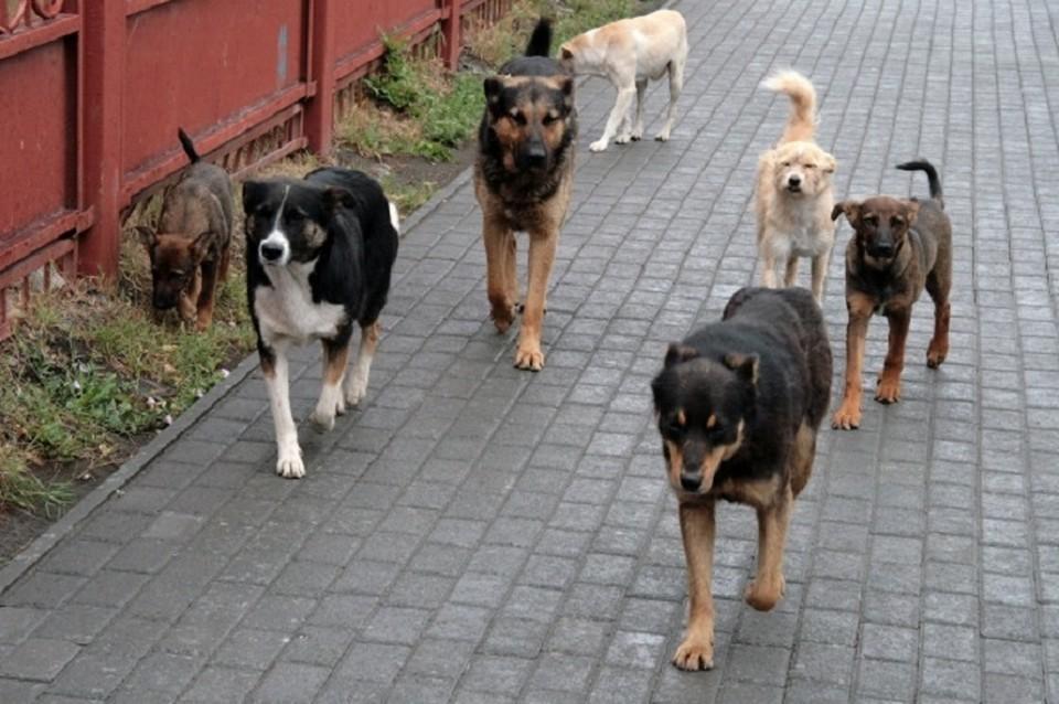 По факту нападения животных проводится прокурорская проверка.