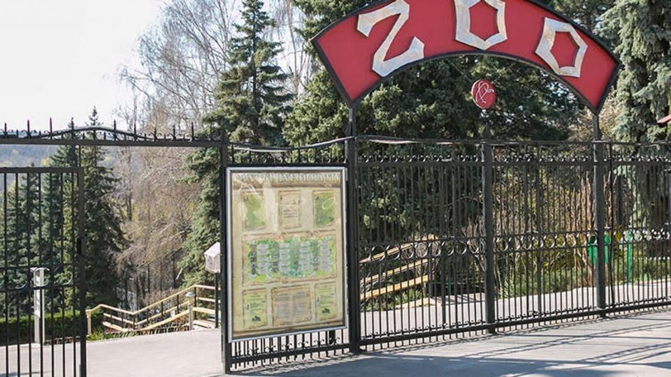 В Кишиневском зоопарке произошла трагедия. Фото: соцсети