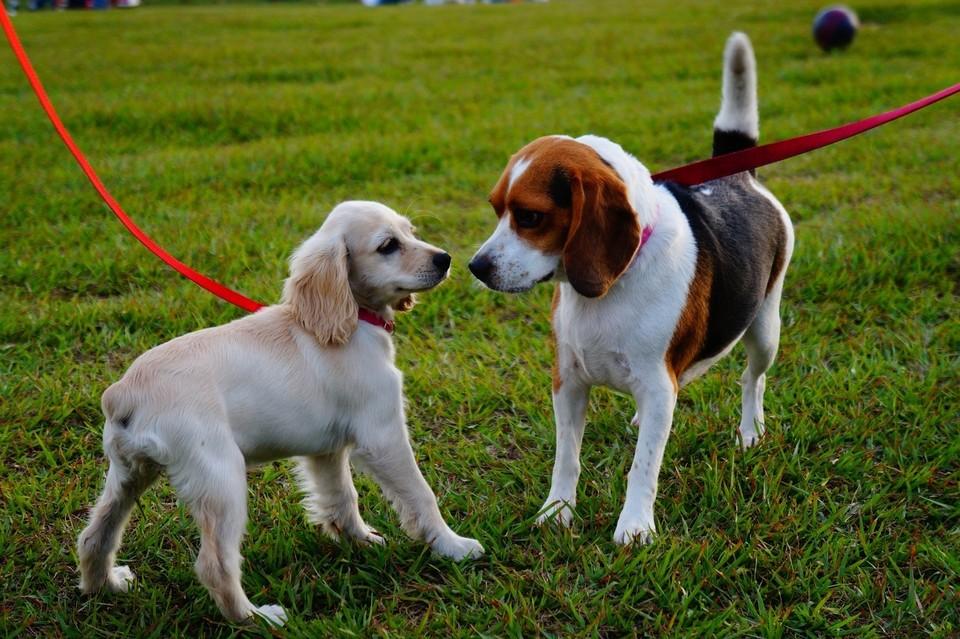В 2021 году в Ижевске организуют три площадки для выгула собак Фото: pixabay.com