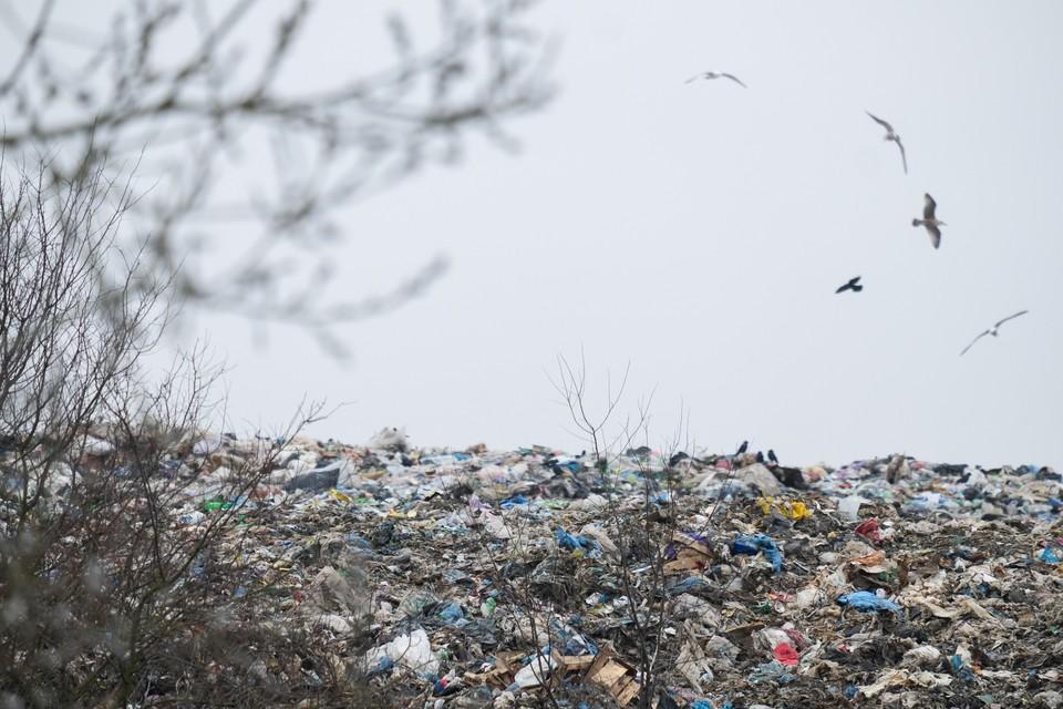 В Ленобласти ликвидировали 23 нелегальные свалки