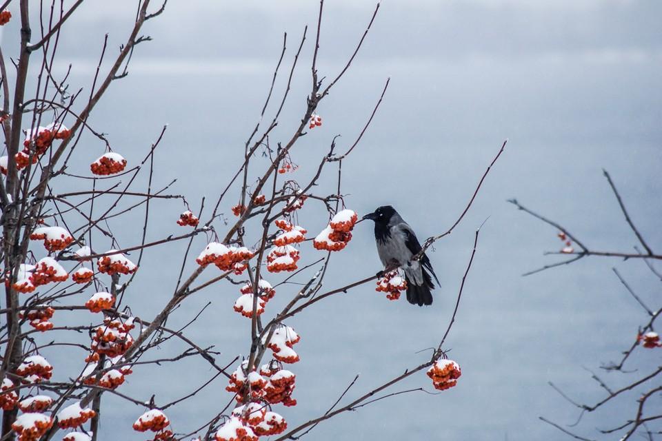 Самарцы переживают, что зима может вернуться