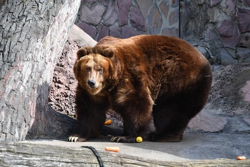 «На рыбалку пошли»: семейство медведей перебежало трассу и скрылось в лесу в Николаевском районе