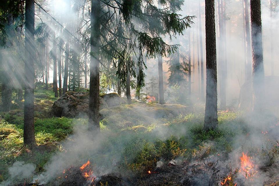 Пожар в национальном парке «Нечкинский» тушили несколько дней. Фото: pixabay.com