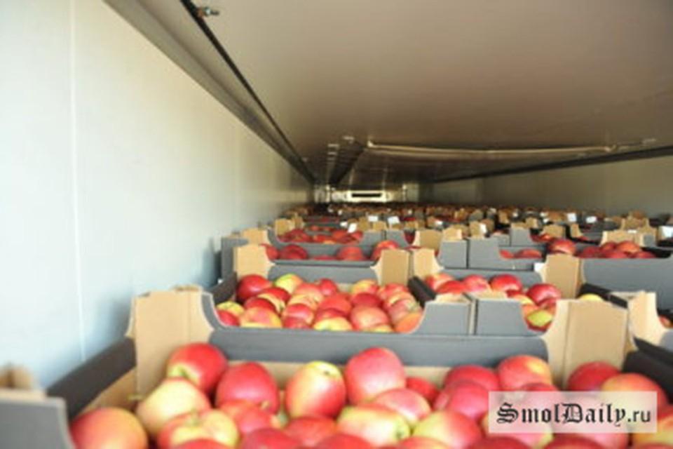 Эти яблоки везли в Россию из Беларуси, в Смоленской области их раздавили и закопали. Фото: smoldaily.ru