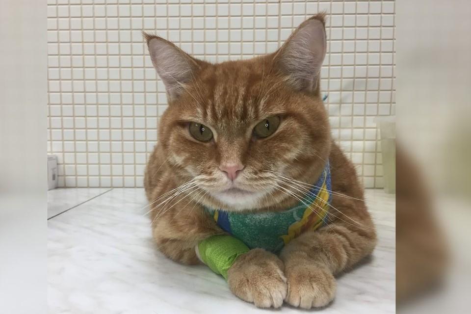 """Степен потерял аппетит из-за нитки. Фото: ветеринарная клиника """"Пульс""""."""