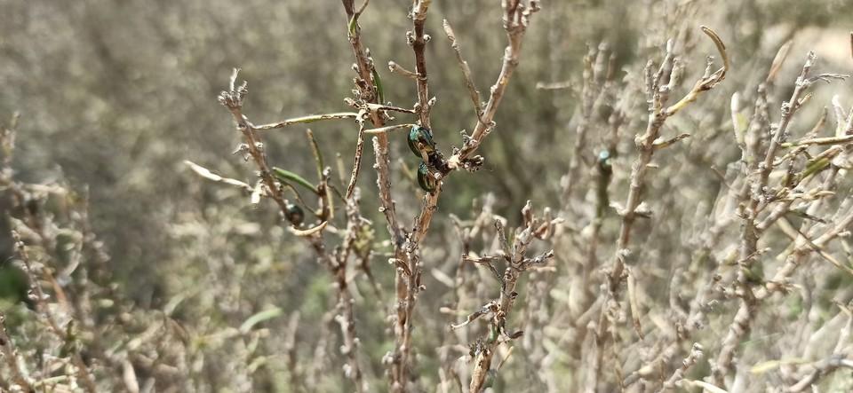 От зеленых листьев розмарина ни осталось и следа. Фото: соцсети