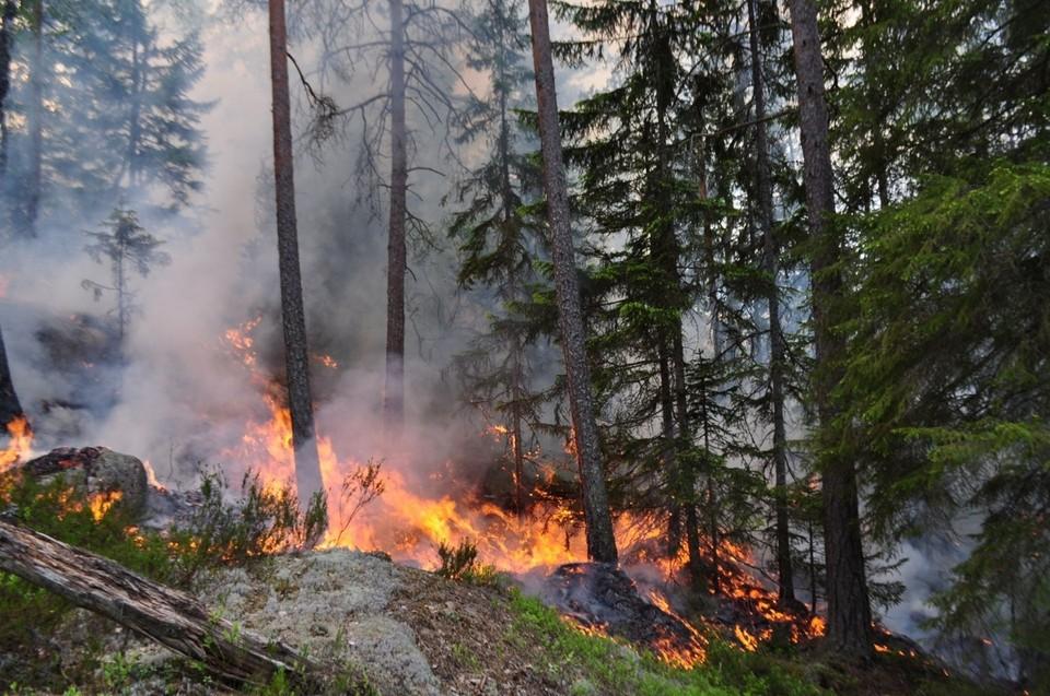 В тюменских лесах высокая пожарная опасность сохранится до 8 июня.