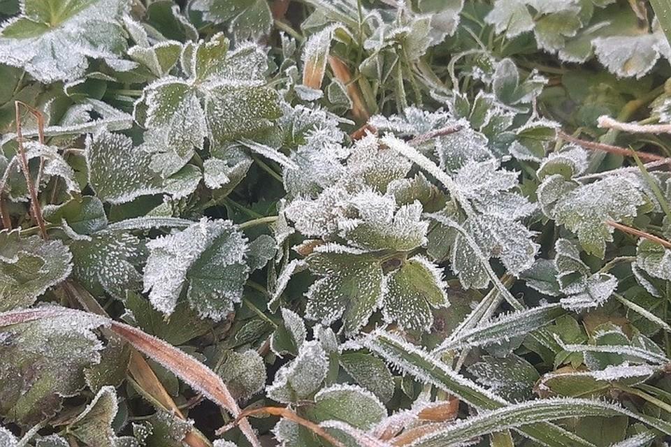 Синоптики предупредили о возможных заморозках в июне