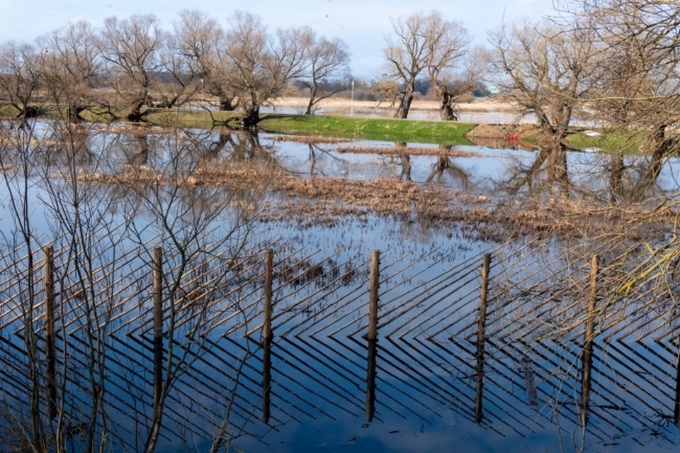 12-летний ребенок утонул в реке Каспля в Смоленской области
