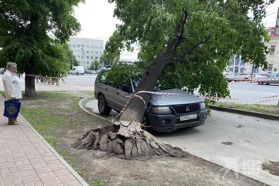 Уже сутки в центре Рязани не могут убрать дерево, рухнувшее на иномарку.
