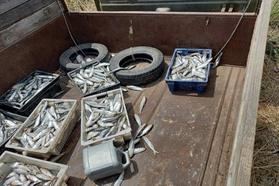 Во время обыска в грузовике нашли сельдь и тарань Фото: пресс-служба ПУ ФСБ России по РО