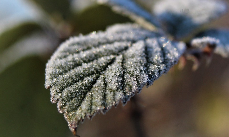 Заморозки до 2 градусов ожидается на севере Казахстана