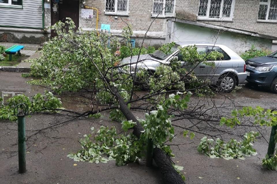 Ураган повалил деревья на машины. Фото: Андрей Борисов